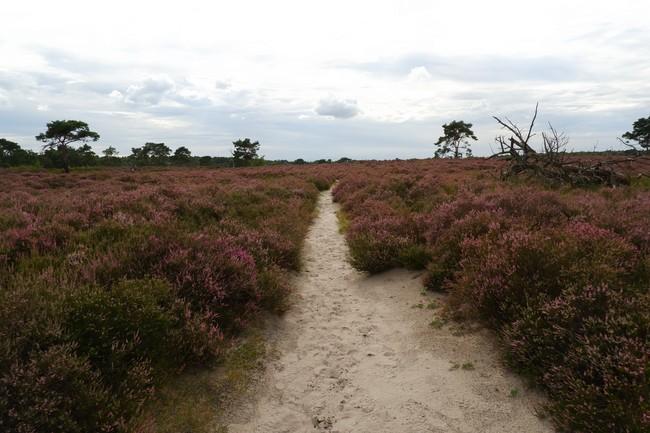 Kalmthoutse Heide wandelroutes heide gebied België Nederland nationaal park